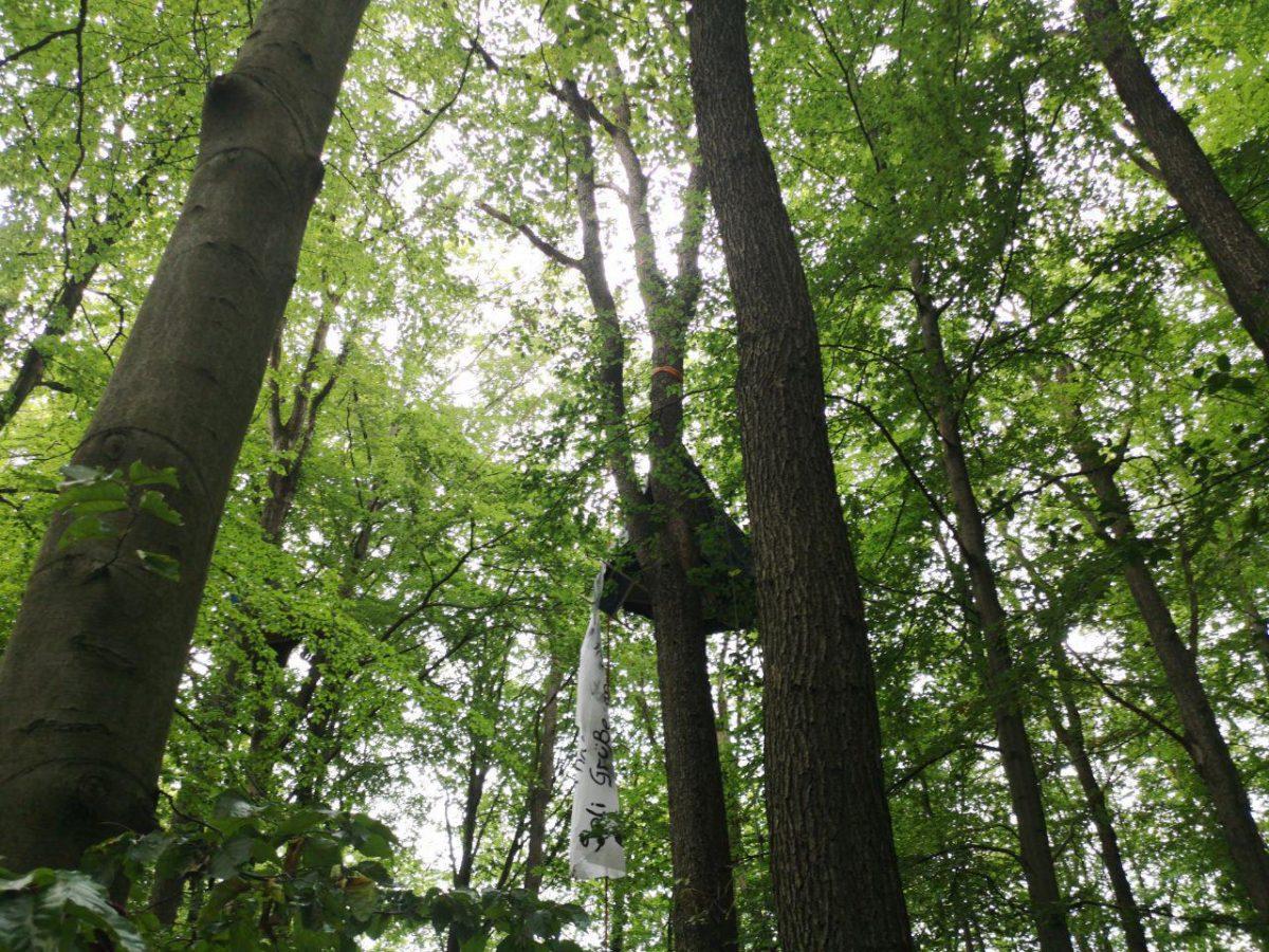 Redebeitrag Jeder Baum Zählt auf die Demo vom 28. September